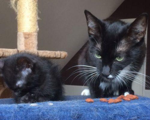 Miri und Bolle – Mami und Sohn