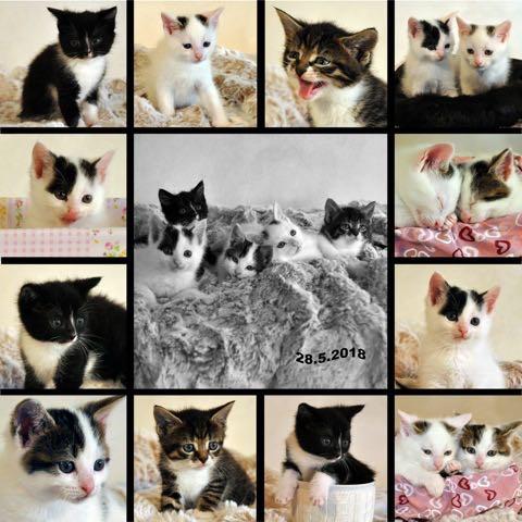 Kitten 2018