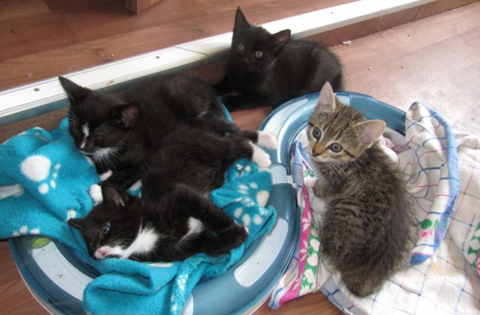 Peppermint Patty, Harry, Purzel und Merlin
