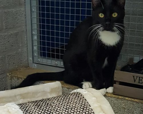 Ania und Mieko – können auch einzeln zu anderen Katzen vermittelt werden