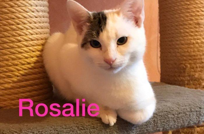 Pflegestelle Borken-Rosalie, sucht Ihre Familie, unbedingt mit Hund !!