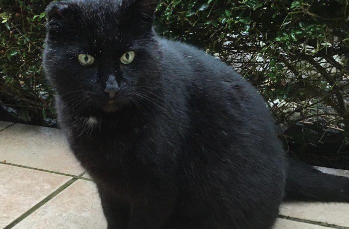 Blacky – Verschmuster Senior sucht kuscheliges Zuhause